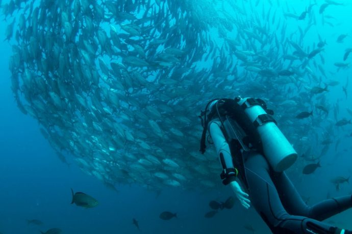 Scuba diver under a large shoal of fish in a blue sea, diving on the French Riviera with Villa Hostels
