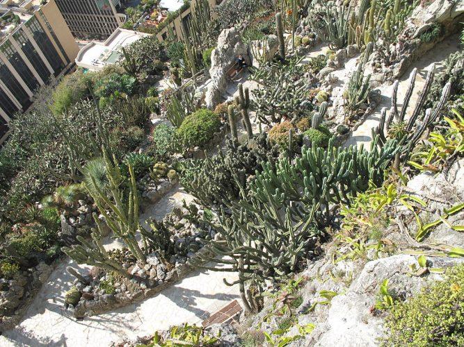 monaco exotique garden cactus