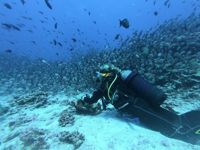 scuba diving with fishes